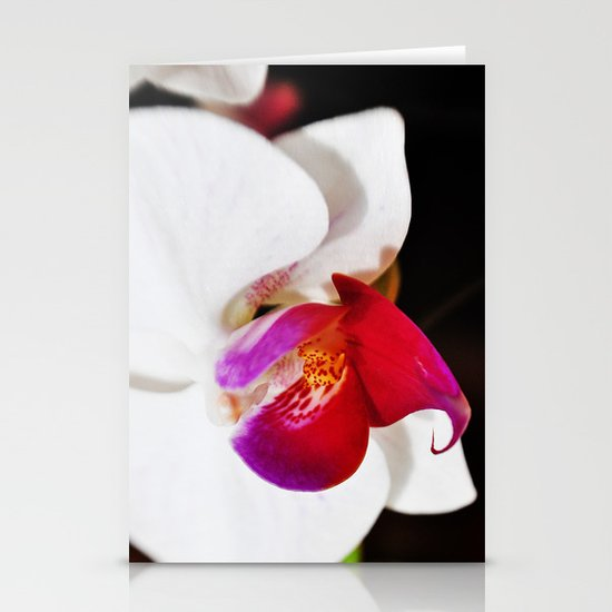 White and Purple Orchid Stationery Cards