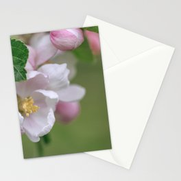 Tender Apple Tree Blossoms In Spring Stationery Cards