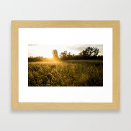 Golden Sunset Framed Art Print