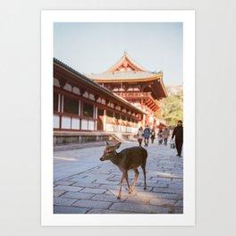 Deer of Nara, Japan near the Todai-ji Temple - Film Photograph Art Print