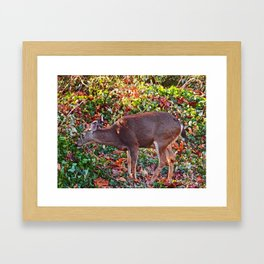 Just grabbing some lunch my Deer Framed Art Print