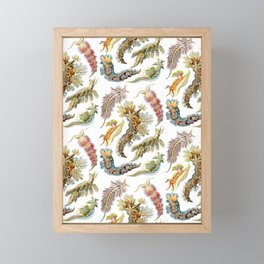 Ernst Haeckel - Nudibranchia (Snails) Framed Mini Art Print