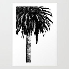 Tropical Darkroom #264 Art Print