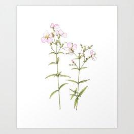 Meadow Beauty Wildflowers Art Print