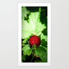 Wild Berry Art Print
