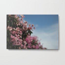 Brazil Blossoms Metal Print