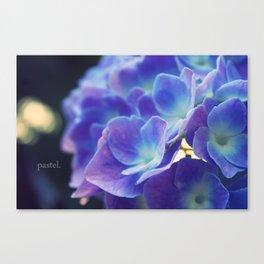 Blue Pastel: Hydrangea Canvas Print