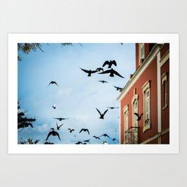 Birds in flight Art Print