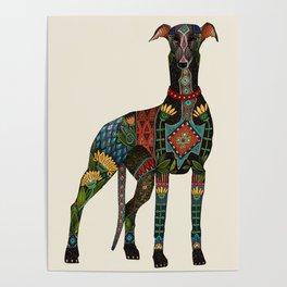 greyhound ivory Poster