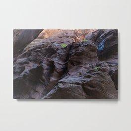 Nature Finds A Way (Zion National Park, Utah) Metal Print