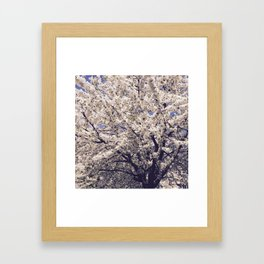 Tree in bloom Framed Art Print