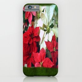 Mixed color Poinsettias 1 Blank P1F0 iPhone Case