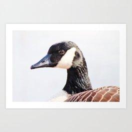 Canadian Goose Portrait Art Print
