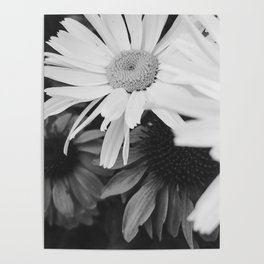 Black and white Daisies Poster