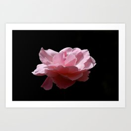 Floating Rose 9961 Art Print