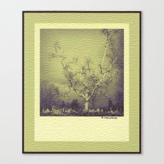 Birch: Early Spring Canvas Print