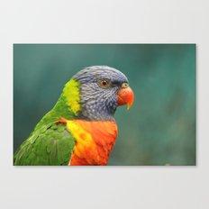 Rainbow Lorakeet  Canvas Print