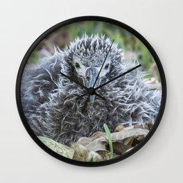Laysan Albatross Chick, No. 1 Wall Clock