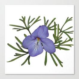 Viola Pedata, Birds-foot Violet #society6 #spring Canvas Print