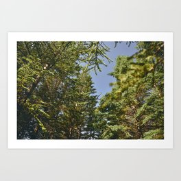 Iceland Forest Art Print
