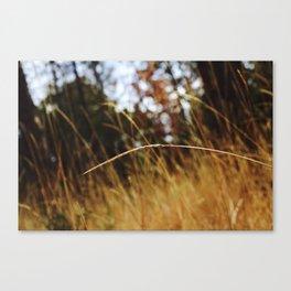 Stranded. Canvas Print