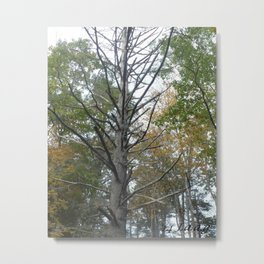 fall wood in the rouph #82 Metal Print