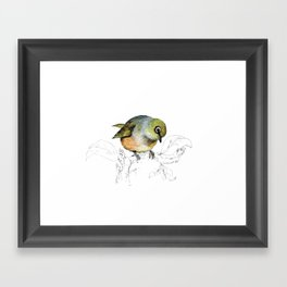 Sylvereye - Waxeye bird Framed Art Print
