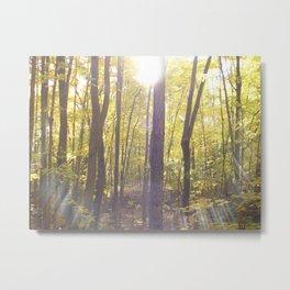 Algonquin Trees Metal Print