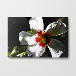 Another Flower Metal Print