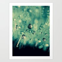 dandelion Art Prints featuring dandelion by Ingrid Beddoes