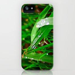 Freshness Unfolds iPhone Case