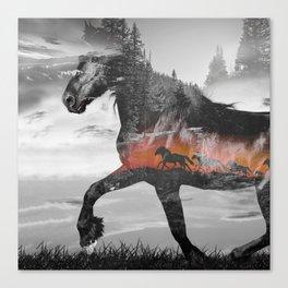 Black Horse Sunset Run Canvas Print
