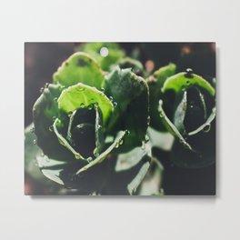 Green Sedum Metal Print