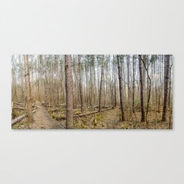 Townsend Park Forest Trails Canvas Print