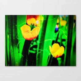 Flowers magic marsh Marigold Canvas Print