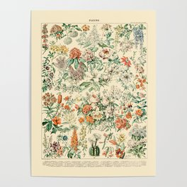 Wildflowers and Roses // Fleurs III by Adolphe Millot 19th Century Science Textbook Artwork Poster