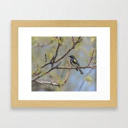 Spring Warblers Framed Art Print