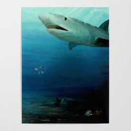 Shark Swimming by Fish in the Ocean Poster
