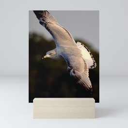 A Seagull Flying at Sunrise on Hilton Head Island Mini Art Print