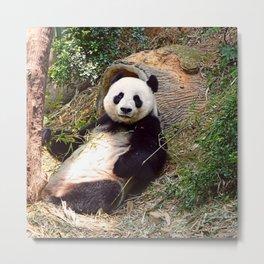 Panda 0315P Metal Print