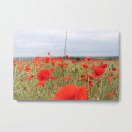Feild Of Poppies Metal Print
