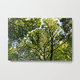 The quiet Forest Metal Print