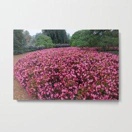 Begonia Bed  Metal Print