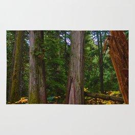 Giant Cedars Boardwalk in Revelstoke BC, Canada Rug