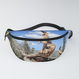 Ancient bristlecone tree Fanny Pack