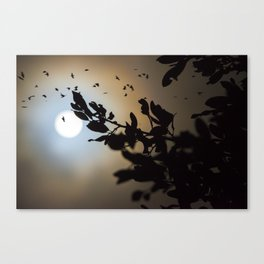 Bats in a Full Moon on Halloween Canvas Print