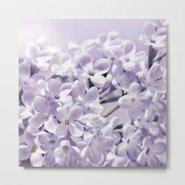 Lilacs  0107 Metal Print