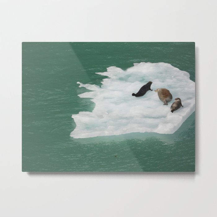 Seals on an Iceberg Metal Print