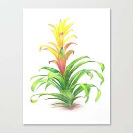 Bromeliad - Tropical plant Canvas Print