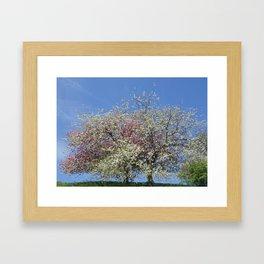 Pink and White Blossom - Blue Sky Framed Art Print